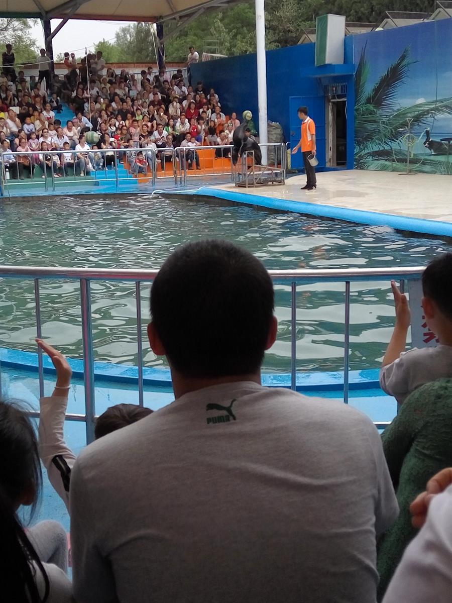 太原动物园【海狮表演】